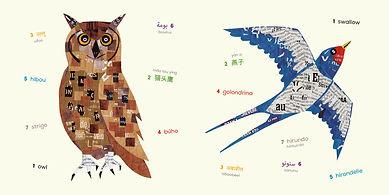 Birds-owl-sparrow.jpg