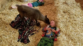bodhi and reindeer -1.jpg