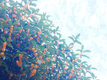 秋空に咲く