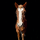 horse4.png