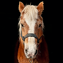 horse6.png