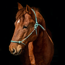 horse5.png
