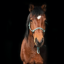 horse8.png