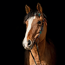 horse7.png