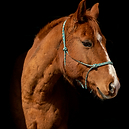 Horse 1.png