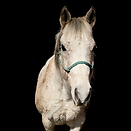 horse2.png