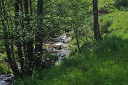 Ruisseau de montagne (à 500 mètres)