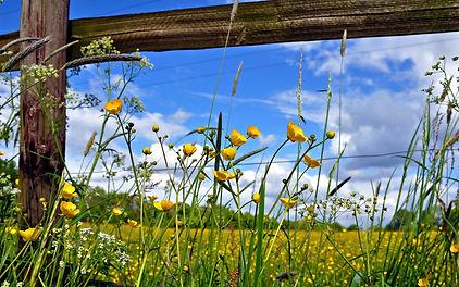 7010558-pasture-fence-flowers.jpg