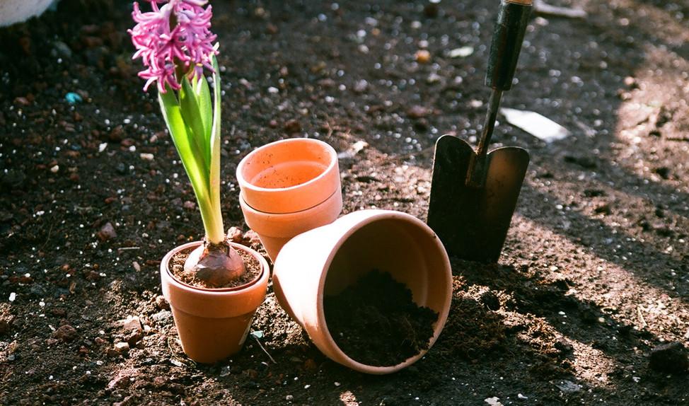 Výsadba Květiny