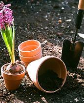 Planter des fleurs