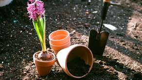 Thinking of a Container Garden?