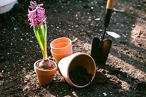 piantare fiori