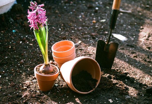 Spring and Planting