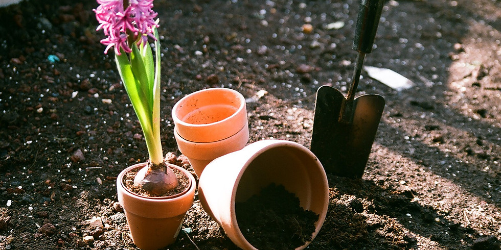 Past event - Clearing and planting with the Garden Museum!