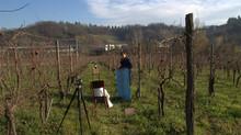 Fotografare i vini tra le vigne...
