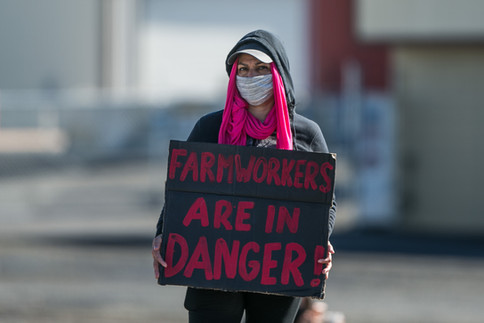 """A Hansen Fruit worker who preferred to remain anonymous holds a placard that reads """"Farmworkers are in danger!"""" during a strike against working conditions amidst the coronavirus outbreak Friday, May 15, 2020, in Yakima, Wash."""