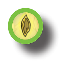 TOKEN - Seed.png