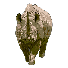 rhino facing.png