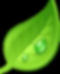 —Pngtree—leafvector_3684767.png