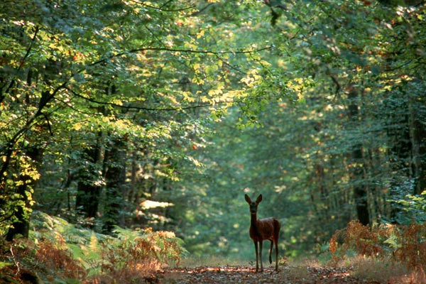 La Forêt D'Ecouves - Le plus grand massif foretstier de la Basse Normandie