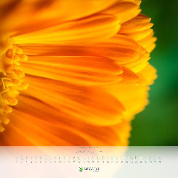 megafyt_kalendar_2018-8.jpg