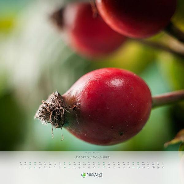 megafyt_kalendar_2018-12.jpg