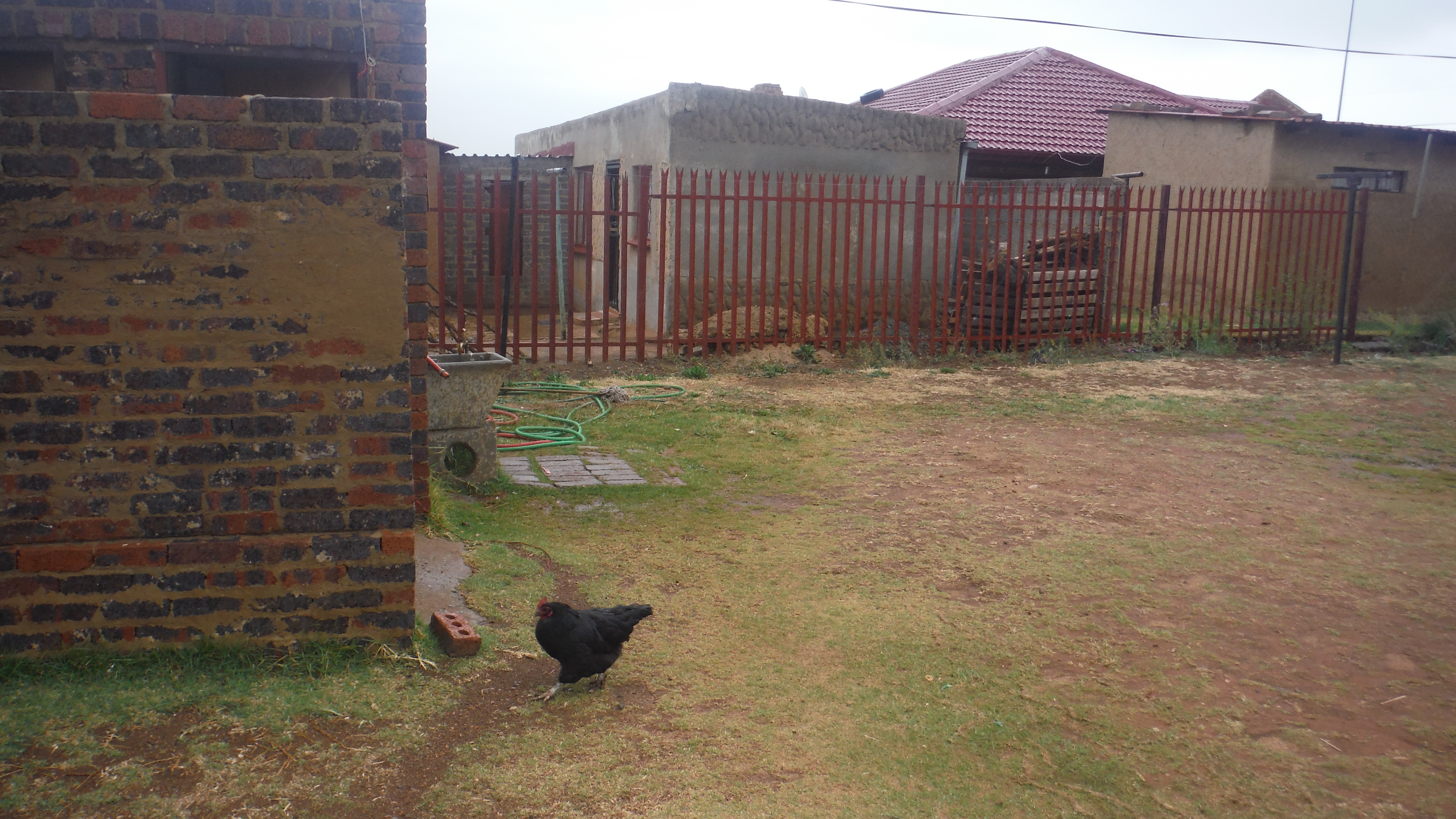 Chickens in the church yard