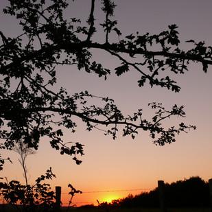 21 zonsondergang