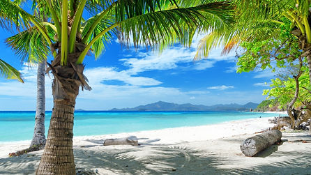 3377357-tropics-beach-sand-palm-trees.jp