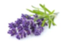 Lavender with leaves.jpg