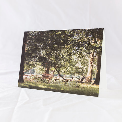 Summer Stag Greeting Card
