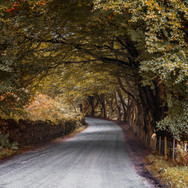 tree tunnel orange copy.jpg
