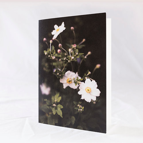 Japanese Anemones Greeting Card