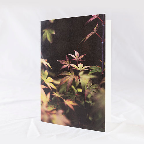 Acer Greeting Card