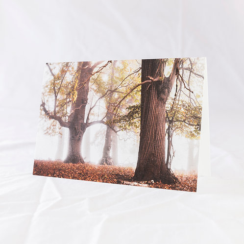 Autumn Giants Greeting Card