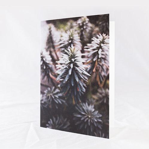 Euphorbia Greeting Card