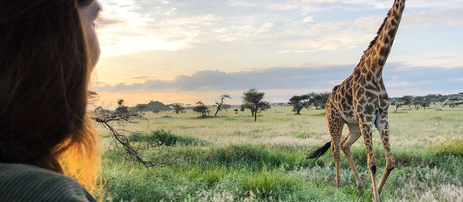 Safari in Tansania – Auf den Spuren der Big 5