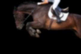 Horse jumping on black background._edite
