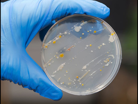 The Importance Of Bacteria Removal