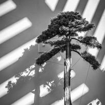 Bonzai Tree, Birmingham