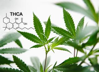 Cannabinoid Spotlight: THCA