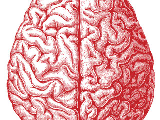 Cannabis Use Does Not Cause Brain Morphology