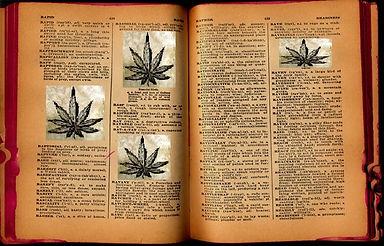 TOCK_CannabisDictionary.jpg