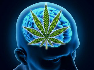 Cannabis May Affect Neurodegenerative Diseases