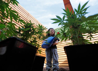 How To Be a Responsible Parent When Using Cannabis