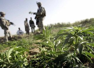 Cannabis and Post Traumatic Stress Disorder