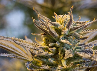 Cannabis and Cancer: Understanding the Potential Effects