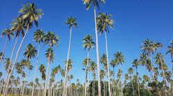Coconut Island Getaway