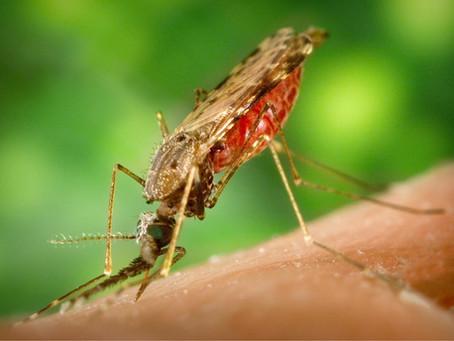 Malaria Fact Sheet