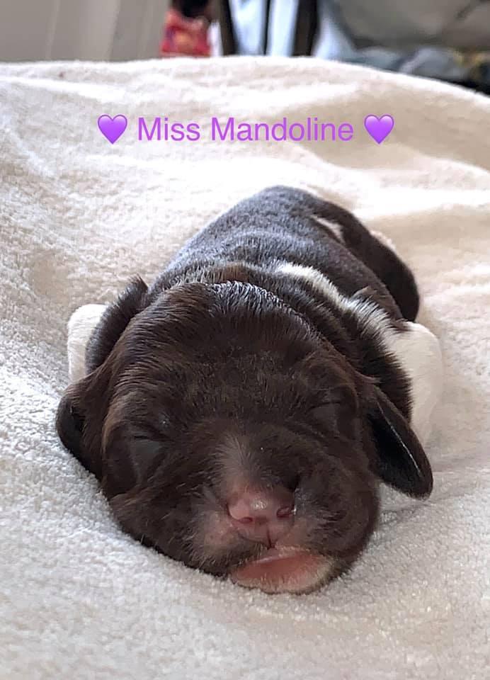 Miss Mandoline